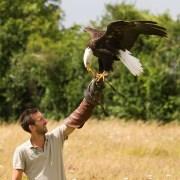 Chris Packham's Top Birds (3)
