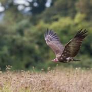 Chris Packham's Top Birds (4)